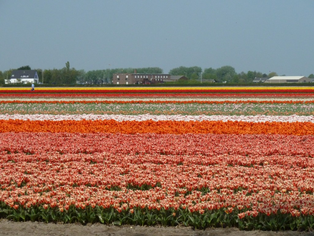 Colpi bassi dai Paesi Bassi
