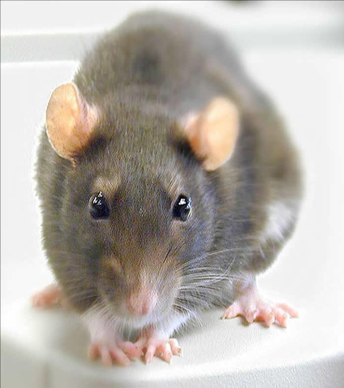 Sperimentazione Animale - una risposta animalista